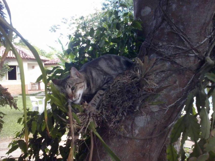 Gatinha, uma de nossas mascotes!