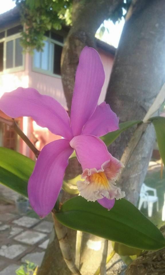Linda Orquídea…